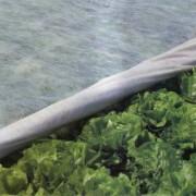 Агроволокно белое 17 г/м²  1,6х10 м