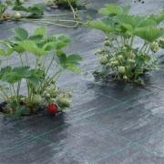 Агроволокно чёрное 50 г/м² 1,07х10 м