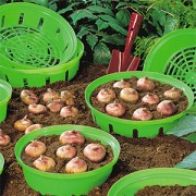 Корзинка для луковиц