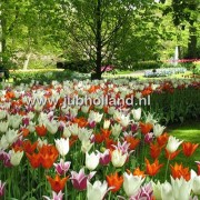 Микс Elegant Lilies