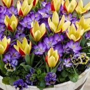 Микс Первая Весна