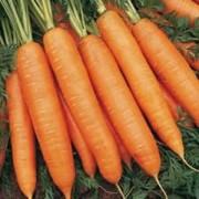 Морковь Олимпус