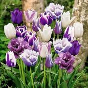 Тюльпаны Парадизо Микс