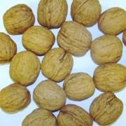 Грецкий орех Howard