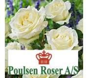 Розы Поульсен