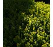 Растения для полутени