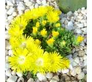 Растения для сухой почвы