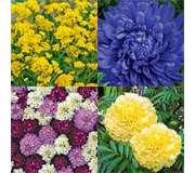 Однолетние и многолетние цветы, цветущие в год посева