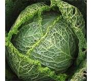 Листовые и черешковые овощи