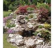Растения для рокариев и каменистых горок