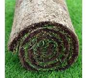 Газонная трава/Рулонный газон