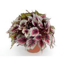 Рассада комнатных растений Купить