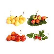 Плодові дерева Купити