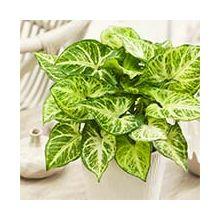 Зеленые комнатные растения Купить
