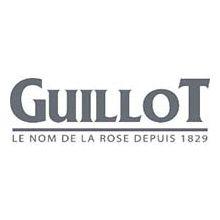 Троянди Guillot Купити