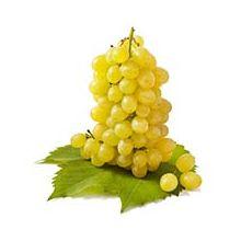 Саджанці винограду кишмиш Купити
