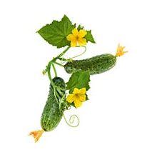 Насіння комахозапильних огірків Купити