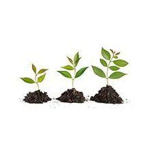 Регуляторы роста растений  Купить