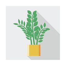 Растения по назначению Купить