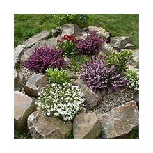 Растения для рокариев и каменистых горок Купить