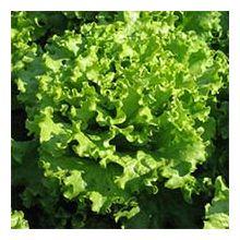 Салат овощи Купити