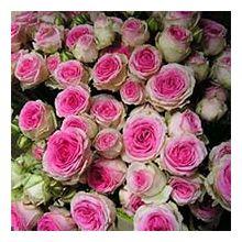 Спрей троянди Купити