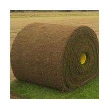 Газонная трава/Рулонный газон Купить