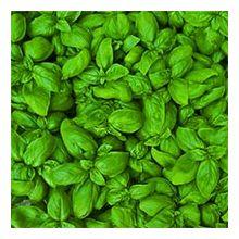 Зеленні культури Купити