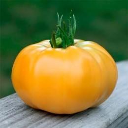 075b054b4ce13e Купить Семена помидор и томатов в Украине недорого почтой | FLORIUM.UA
