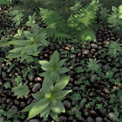 Тенелюбивые растения Купить