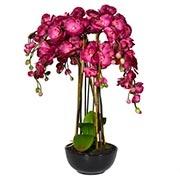 Все для орхідей Купити