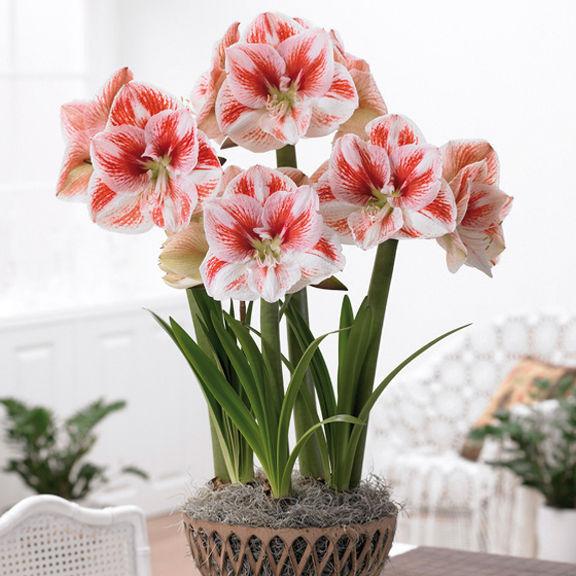 Заказ каталога цветов и растений где можно купить цветы оптом в москве в пачках