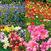 Однолетние и многолетние цветы, цветущие в год посева Купить