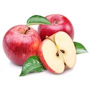 Саджанці яблуні Купити