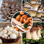 Комплекты грибов Купить