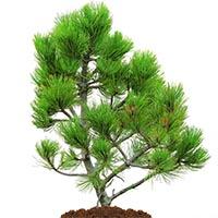 Добрива для хвойних рослин Купити