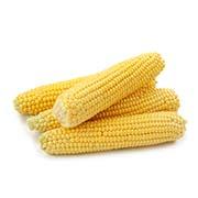 Насіння кукурудзи Купити