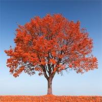 Лиственные деревья Купить