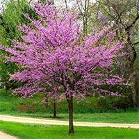 Экзотические деревья Купить