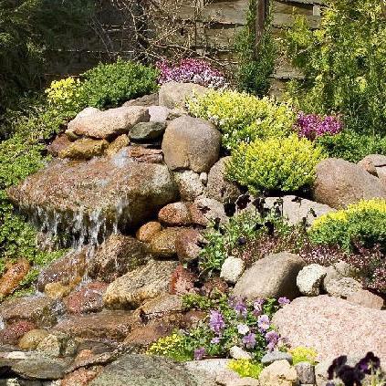 Растения для альпийской горки Купить