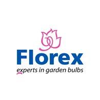 Florex Купить