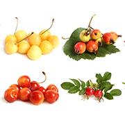 Плодовые деревья Купить