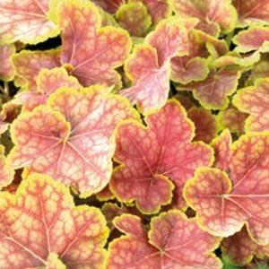 Декоративно-лиственные растения Купить