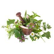 Насіння лікарських рослин Купити