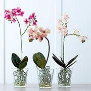 Горщики та аксесуари для орхідей Купити