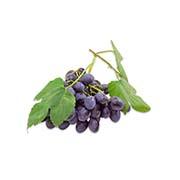 Ранние сорта винограда Купить