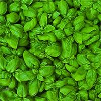 Зеленные культуры Купить