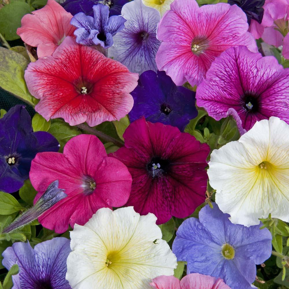 Купить однолетние цветы москва, подарок молодоженам