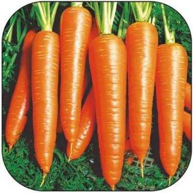 Морква Віта Лонга смотреть