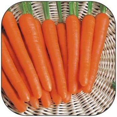 Морква Нантес купить онлайн